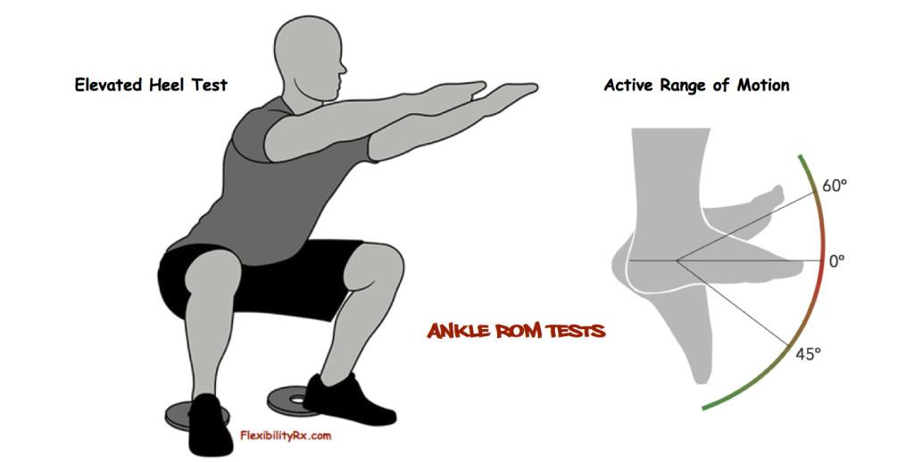 FitnessAssessment | FlexibilityRx™ - Performance Based ...