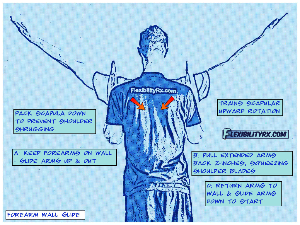 Shoulder Mobility and Scapular Stability | FlexibilityRx ...