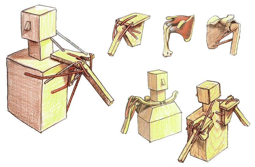 Scapular-Wall-Slide-Anatomy