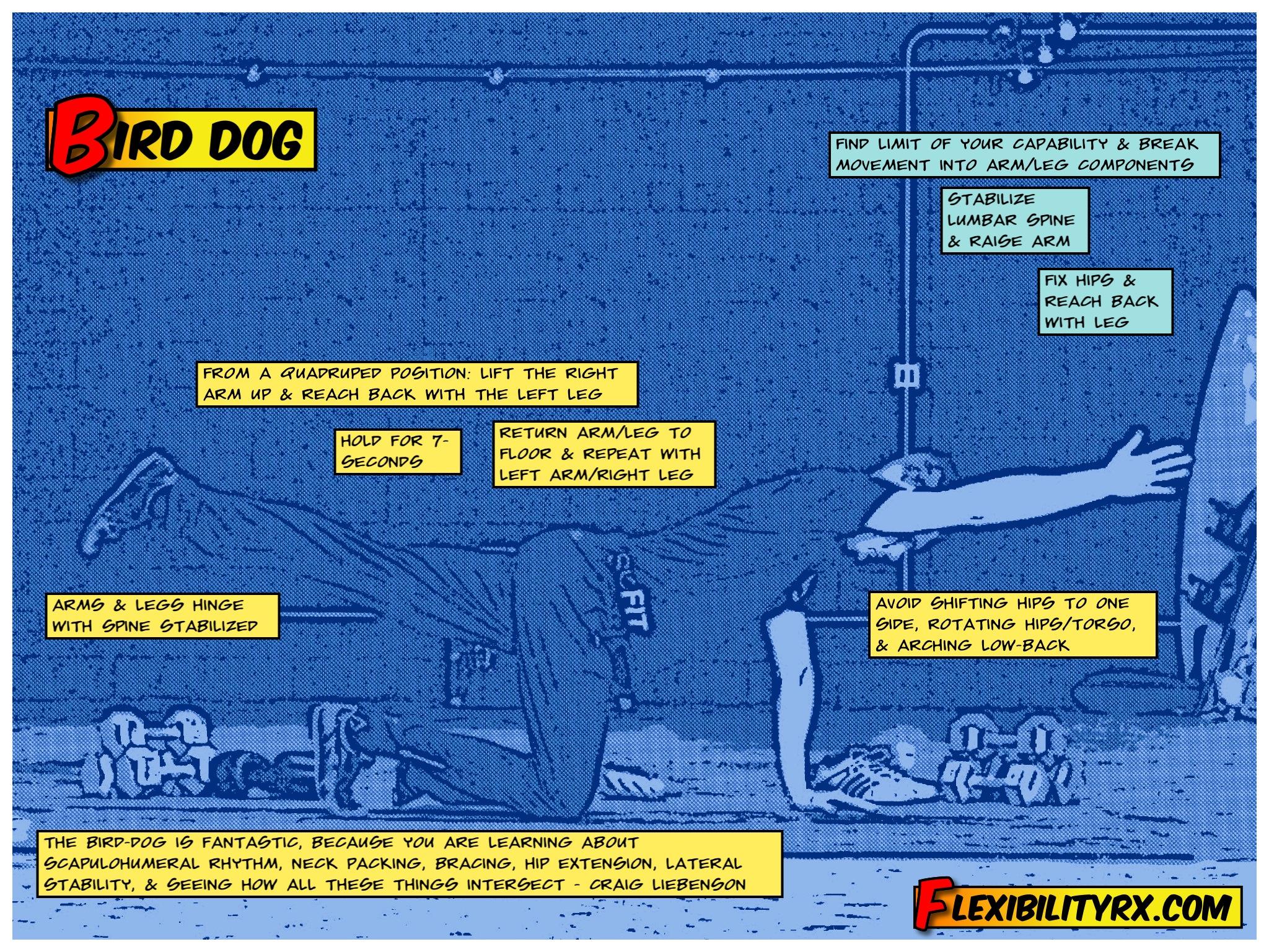 The Bird Dog Exercise More Than Rotary Stability Flexibilityrx