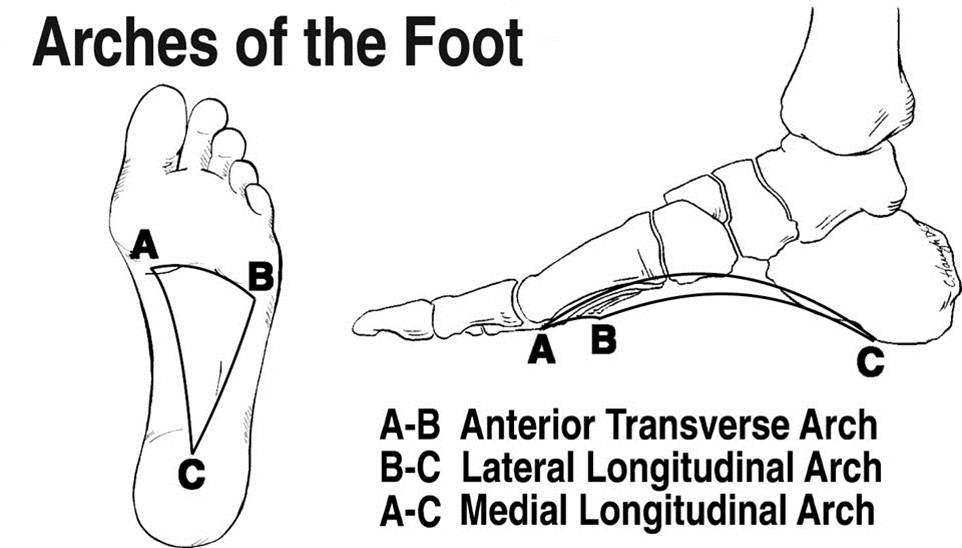 intrinsic foot strength and the short foot position