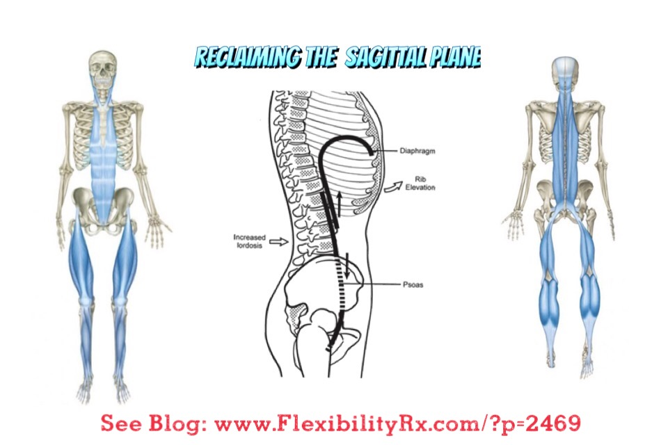 Reclaiming the Sagittal Plane | FlexibilityRx™ - Performance Based ...
