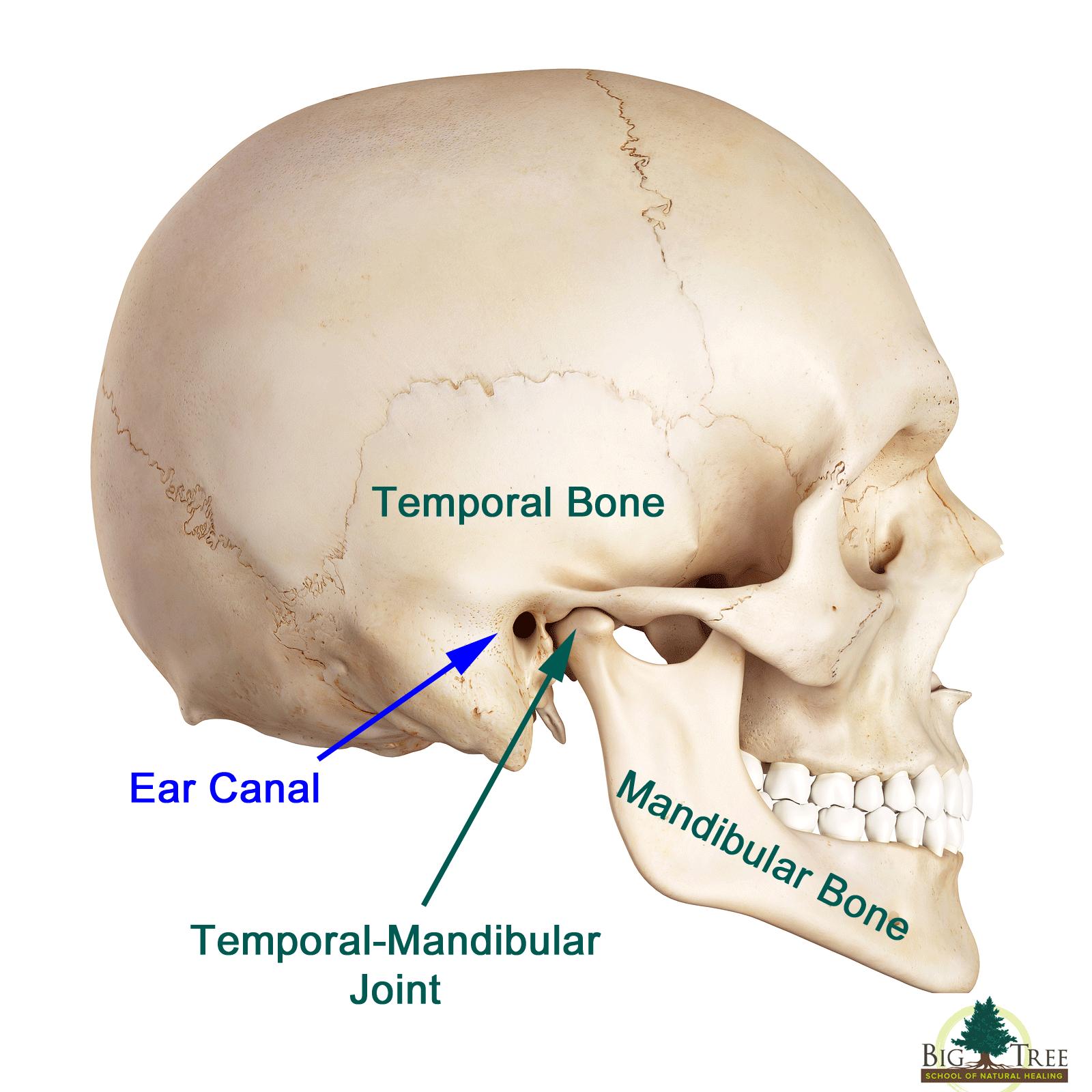 Temporomandibular Joint Disorders TMJ amp TMD Overview - satukis.info